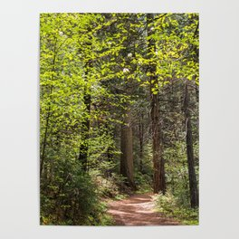 Forest Trail - Yosemite's Wawona Loop Trail Poster