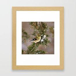 Professor Goldfinch Framed Art Print