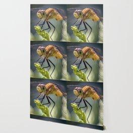 Dragonfly Closeup Wallpaper