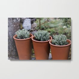 Potted Lavender Metal Print