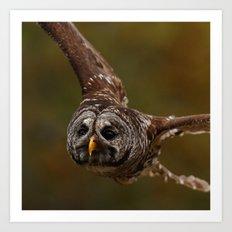 Owl~ Art Print