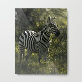 A girl who likes zebra print knows how to live life to the fullest. Metal Print