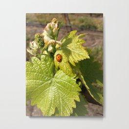 Ladybugs Love Vineyards Metal Print