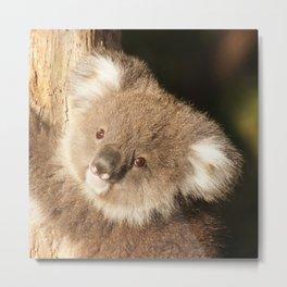 Koala20150301 Metal Print