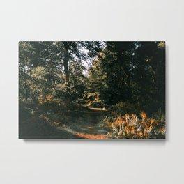 Autumnal Atmosphere Metal Print