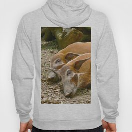 Red River Hogs taking a nap Hoody