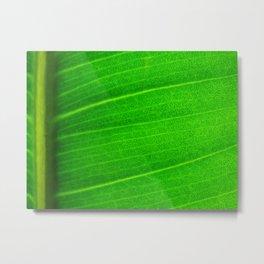 Leafing Metal Print