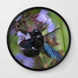 Xylocopa Violacea Wall Clock