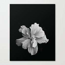 Hibiscus Drama Study - Black & White High Impact Photography Canvas Print