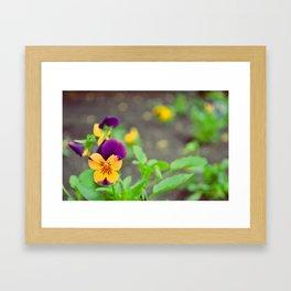 Purple Flowers in Early Spring Framed Art Print