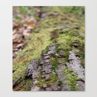 moss Canvas Prints featuring Moss by Tayler Smith