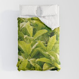 Indian variety of tea Comforters