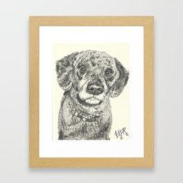 Curly dog Framed Art Print