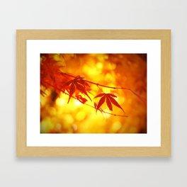 Red Maple in Golden Autumn Framed Art Print
