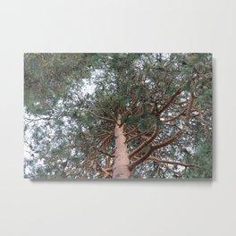 In the tree Metal Print