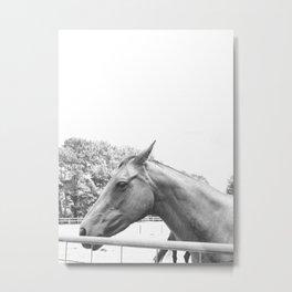 Horse Head IV Metal Print