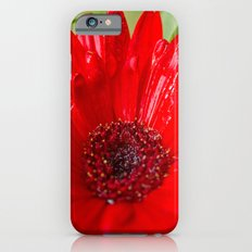 Red Gerber Daisy Slim Case iPhone 6s