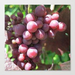 Red Grape 3 Canvas Print