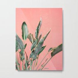 Palm on pink   Botanical photography print   Spain travel photo art Metal Print