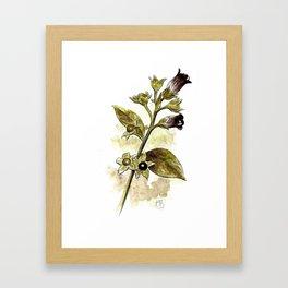 Atropa Belladonna Framed Art Print