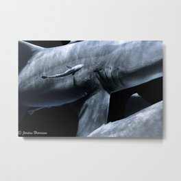 Shark Crossing Metal Print