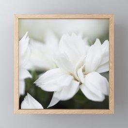 Snow White Flowers on a Dark Background #decor #society6 #buyart Framed Mini Art Print