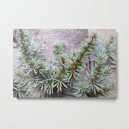 Elfin Forest of Blue Spruce Metal Print