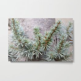 Elfin Forest of Blue Spruce Metal Print