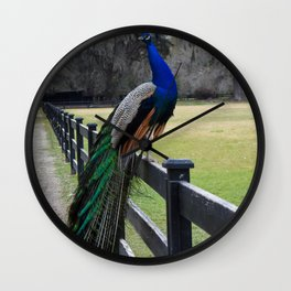 Proud as a Peacock Wall Clock