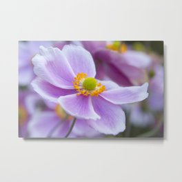 Soft Bloom Metal Print