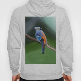 Silver-breasted broadbill Bird Hoody