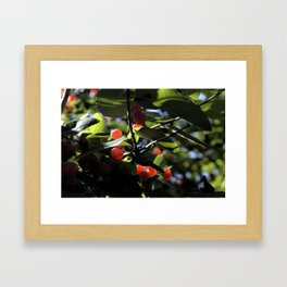 Jane's Garden - Sunkissed Red Berries Framed Art Print
