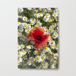 Poppy and the flowers Metal Print