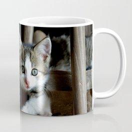 A small cats dream team in the siesta Coffee Mug