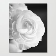 White Ranunculus Black and White Photography Nature Flower  Canvas Print