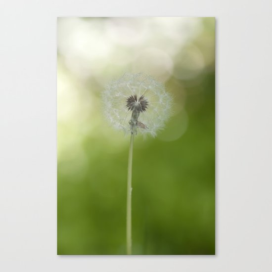 Dandelion in LOVE- Flower Floral Flowers Spring on #Society6 Canvas Print