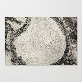 Paperbark Canvas Print