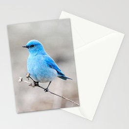 Mountain Bluebird on the Tansy Stationery Cards