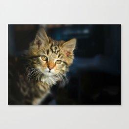 Serious cat portrait Canvas Print