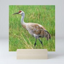 Bird Series: Sandhill Crane Mini Art Print