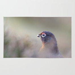 red grouse (Lagopus lagopus scotica) Rug