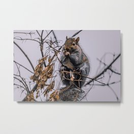 Rodents In The Tree, Photograph Metal Print