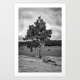 Ragged Pine Art Print