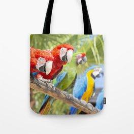 Curious macaws Tote Bag