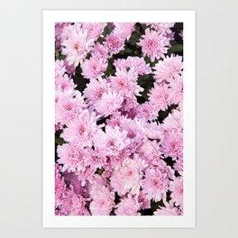 A Sea of Light Pink Chrysanthemums #1 #floral #art #Society6 Art Print