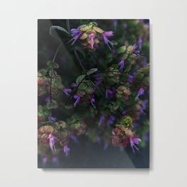 Dittany of Crete Metal Print
