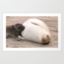 Nursing Elephant Seal Art Print