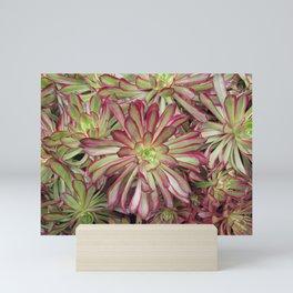 Looks Like a Rose Succulent Mini Art Print