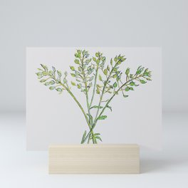 Botanical Seed Heads Drawing Mini Art Print