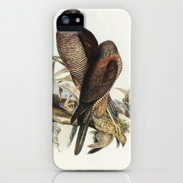Australian Goshawk (Astur approximans) illustrated by Elizabeth Gould (1804–1841) for John Gould's ( iPhone Case